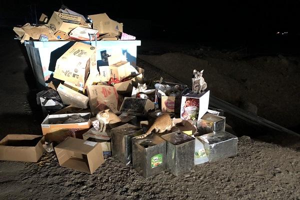حاويات النفايات بمفرق النخيل تتحول إلى مأوى للقطط والحشرات